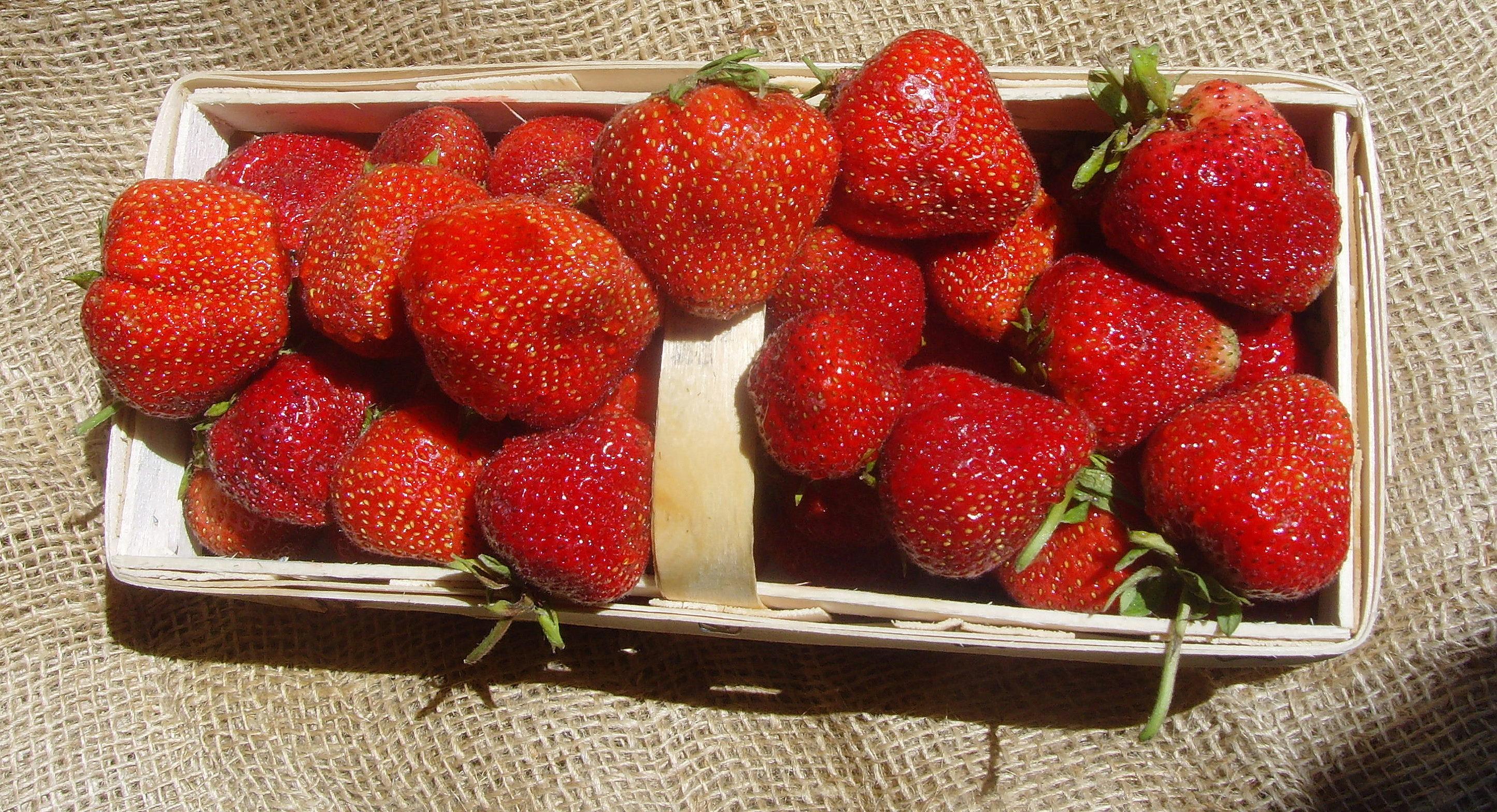 ostara erdbeeren mit