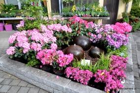 Rhododendron und Azalea am Brunnen